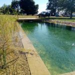 aquatic planting and gravel beds filter the water